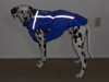 Custom Chillybuddy winter dog jacket made for a Dalmatian in Blue
