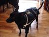 Black Chillybuddy winter dog jacket