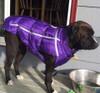 Chillybuddy winter dog jacket in purple