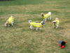 Siblings in yellow Chillybuddy winter dog jackets