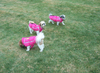Siblings in Raspberry Pink Chillybuddy winter dog jackets