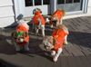Siblings in orange  Chillybuddy winter dog jackets