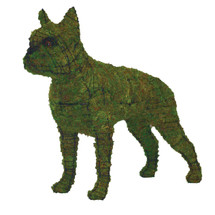 Boston Terrier Mossed Frame Topiary Dog
