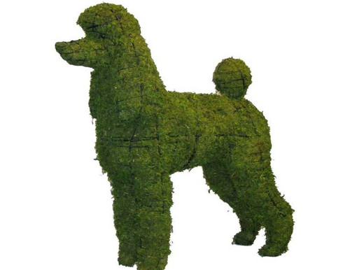 Poodle Mossed Topiary Dog is sized to the miniature scale
