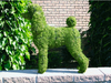 Miniature Poodle Mossed Topiary Dog