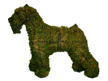 Schnauzer Mossed Frame Topiary Dog Sculpture