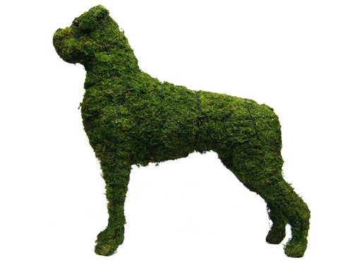 Boxer Mossed Frame Topiary Dog