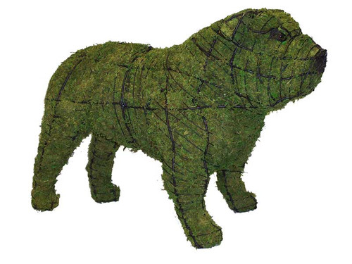 Bulldog Mossed Topiary Dog
