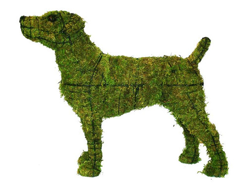 Jack Russell Mossed Frame Topiary Dog