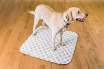 Large PoochPad Washable Potty Pad