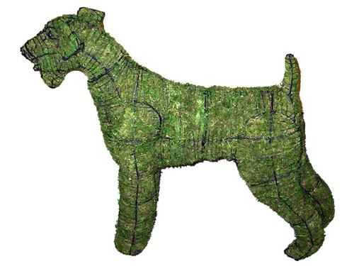 Airedale Mossed Topiary Dog Mossed Frame