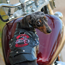 Black Biker Dog Motorcycle Jacket