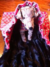 Red Skull Pillow Pet Pocket Bed