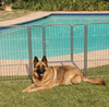 Portable Indoor/Outdoor Kennel Exercise Pen Dog Run being utilized as a fence around a pool.