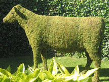 Cow Mossed Topiary