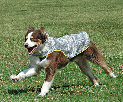 Chillybuddy Cooling Jacket shown with yellow edging
