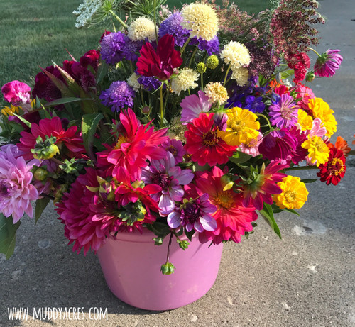 cut flower, bucket of blooms, diy flowers, diy wedding flowers