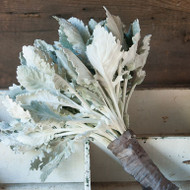 Dusty Miller, Silver, Cut Flower, Filler, Foliage