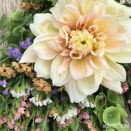 Dahlia, Breakout, Blush, Wedding, Dinnerplate, tuber, dahlia tuber