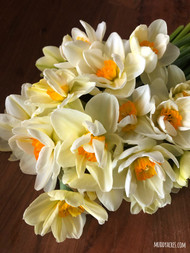 flower drift, narcissus, daffodil