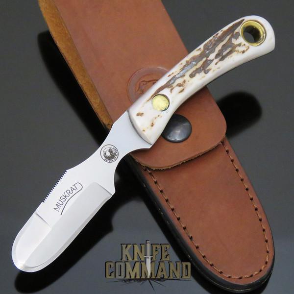 Knives of Alaska Muskrat D2 Stag Skinning Hunting Knife 00091FG