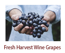 Fresh Harvest Wine Grapes (Seasonal)