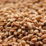 Wheat Malt - Organically Grown