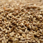 Carapils Malt - Organically Grown