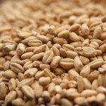 White Wheat Malt