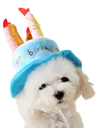 Dog Blue Birthday Hat