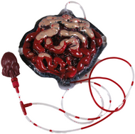 Adult Bleeding Intestines Halloween Accessory