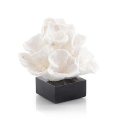 Foliose Coral on Black Marble Base