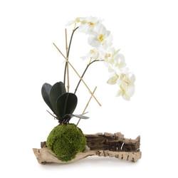 Organic Phalaenopsis