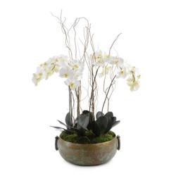 Tuscan Phalaenopsis