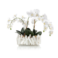 Selenite Orchids