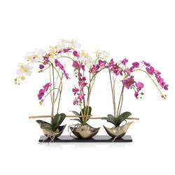 Silhouette Orchids