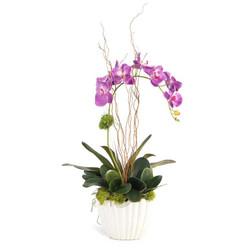 Vibrant Asian Orchid