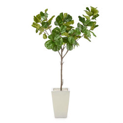 Christine's Fiddle-Leaf Fig