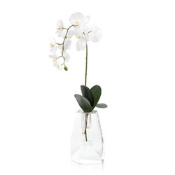 Crystal Orchid