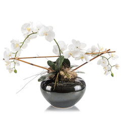 Phalaenopsis Trellis