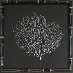 White Sea Fan