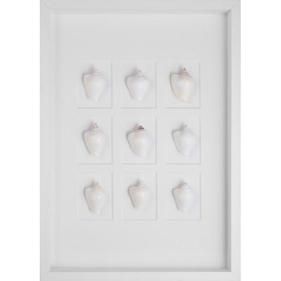 White Conch Shells