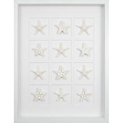 Twelve Starfish