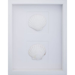 Giant White Scallop Shells