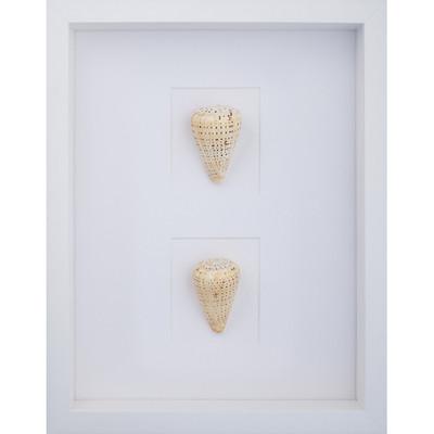 Beach Cone Shells