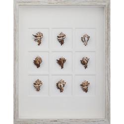 Endive Murex Shells