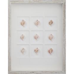 Pink Murex Shells