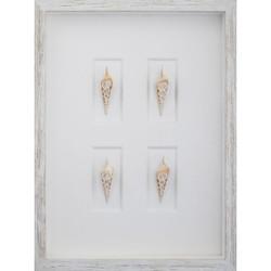 Arabian Tibia 4-cut Shells