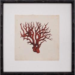 Mini Red Coral VI