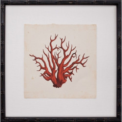 Mini Red Coral VII